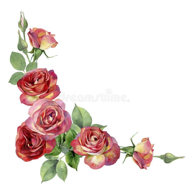 Угол акварели, красных роз иллюстрация штока