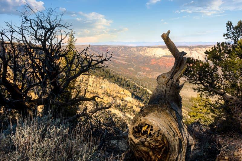 Угол арфистов обозревает в северо-западном Колорадо стоковое фото rf