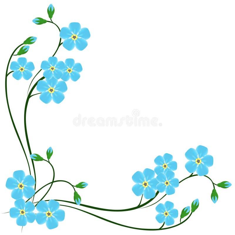 Угол с синью забывает меня не цветки на белой предпосылке иллюстрация вектора