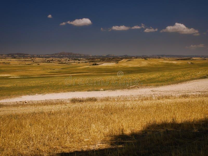 Угроза зерновых полей стоковые фотографии rf