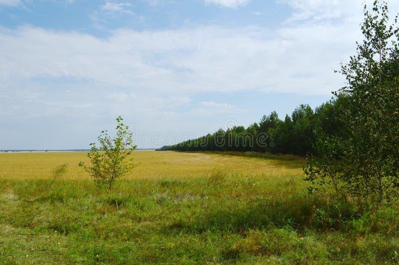 Удаленный лес стоковые изображения rf