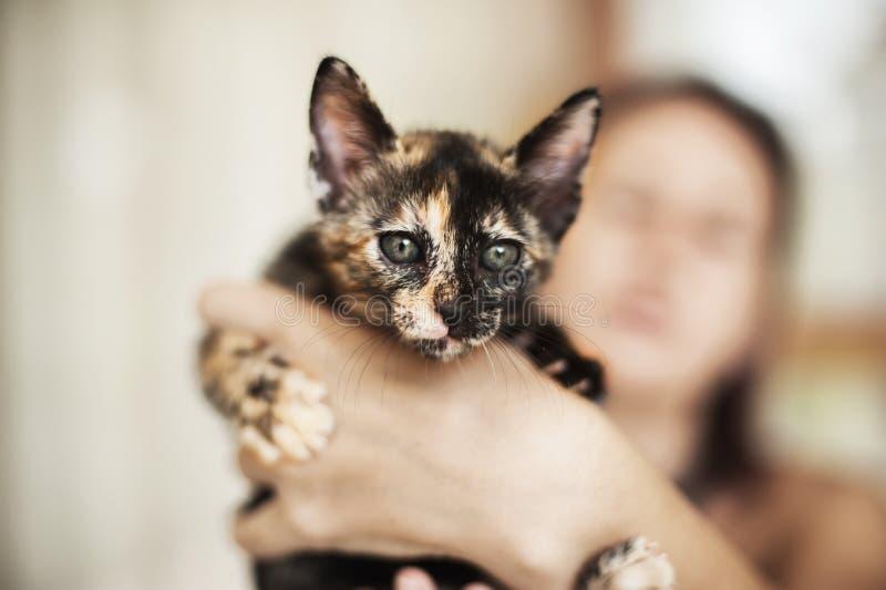 Удерживание милых tricolor monts котенка 2 старое в руках стоковые изображения