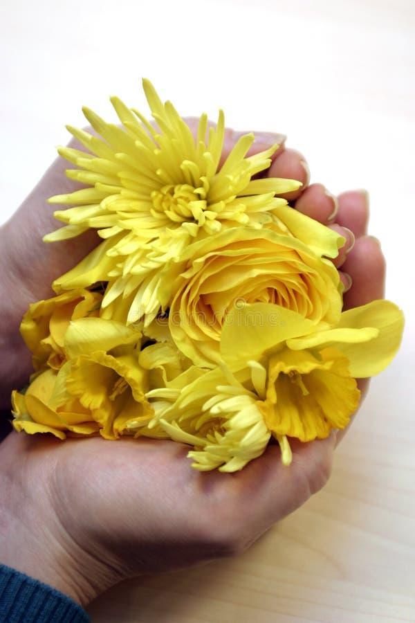 удерживание цветка стоковая фотография