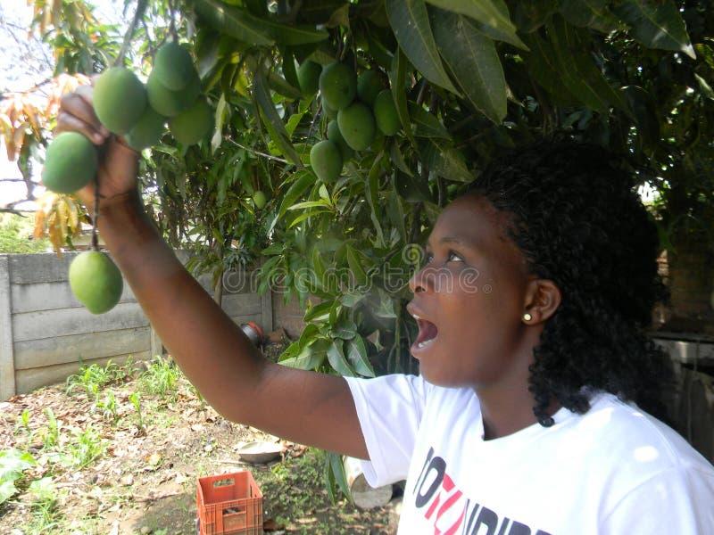 Удивленная африканская женщина держа манго приносить в дереве стоковое фото