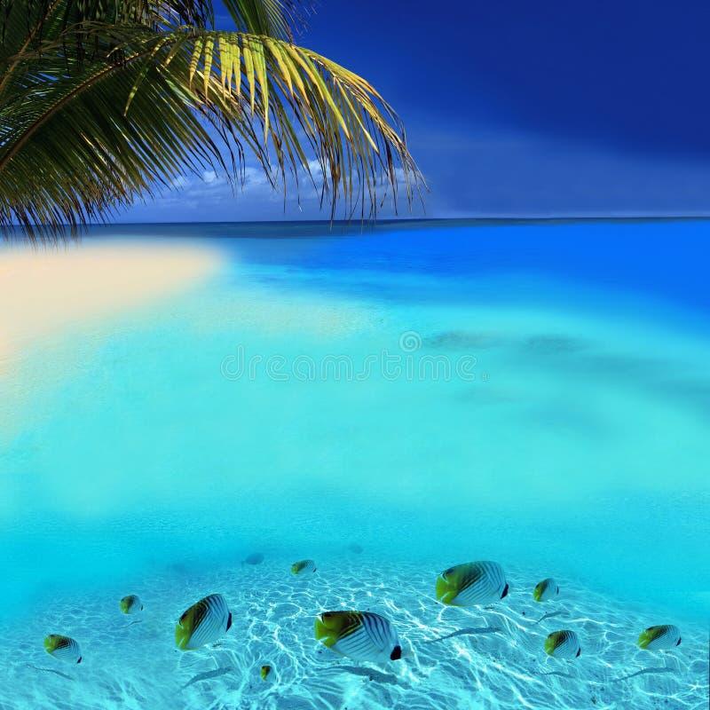 удит тропическое стоковые изображения rf