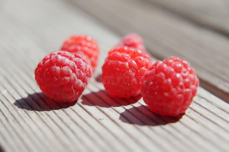 Удовольствие ягоды рая стоковое изображение rf