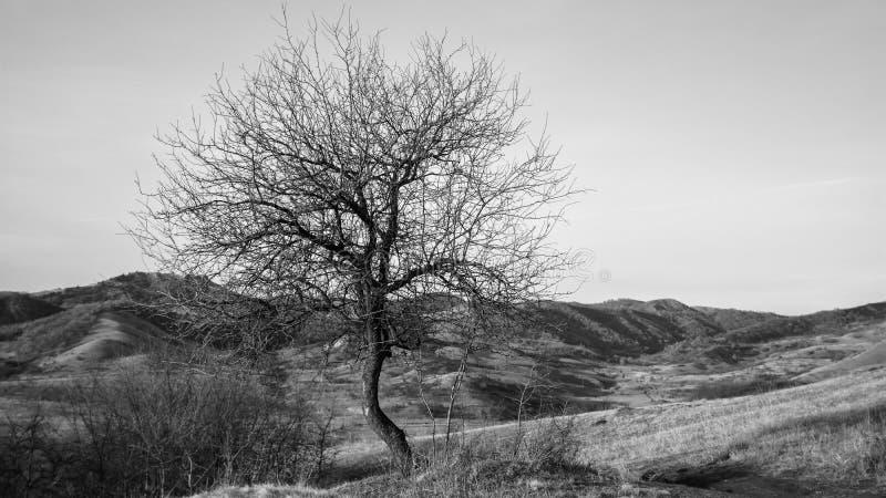 Уединение, черно-белое одиночное пустое дерево в осени стоковые фото