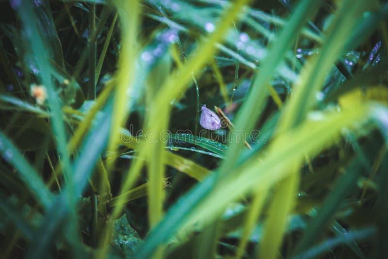 Уединенная бабочка на влажной траве стоковые фото
