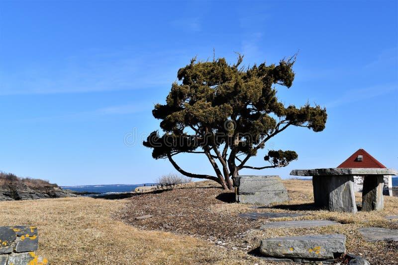 Уединенное дерево на бухте красильщика на скалистой накидке Элизабет, Cumberland County, Мейне, Новой Англии США стоковое фото rf