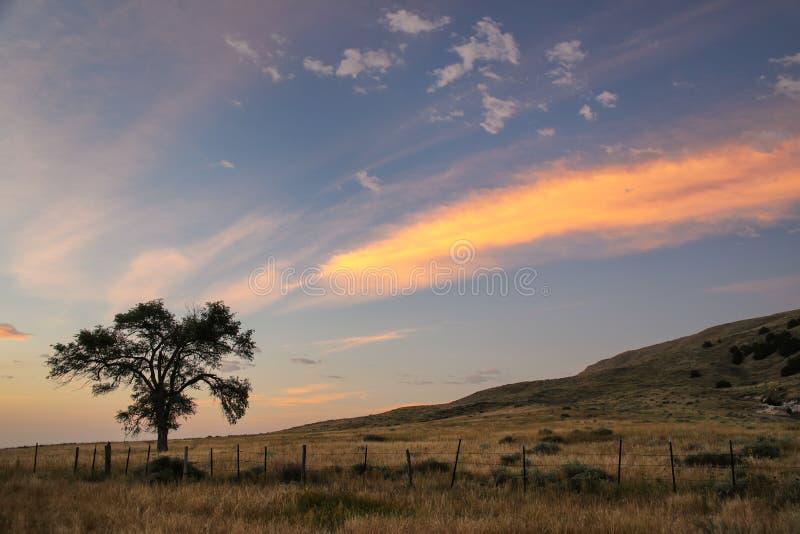 Уединенное дерево на восходе солнца, западная Небраска, США стоковые фото