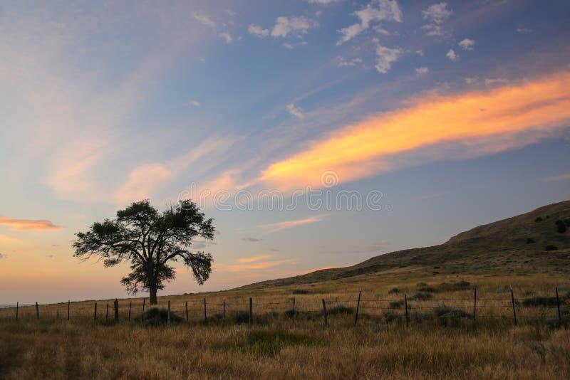 Уединенное дерево на восходе солнца, западная Небраска, США стоковая фотография