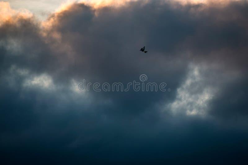 Уединенное летание змея среди темных облаков в бурном небе стоковая фотография
