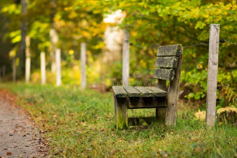 Уединенную старую деревянную скамью в зеленом желтом лесе осени можно использовать как предпосылка Открытый космос для текста стоковые фото