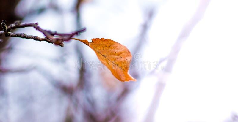 Уединенные сухие коричневые лист на ветви в autumn_ стоковые фотографии rf