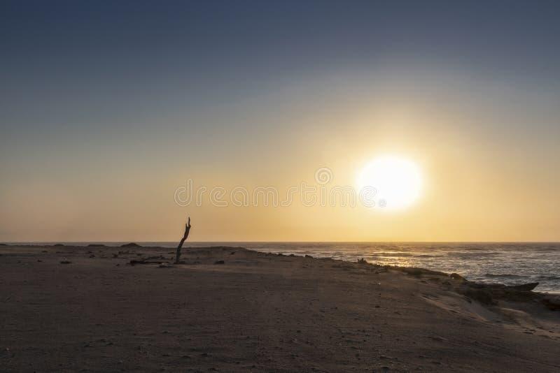 Уединенный ствол дерева с заходом солнца на горном склоне пляжа Namibe дикого вышесказанного anisette стоковая фотография rf