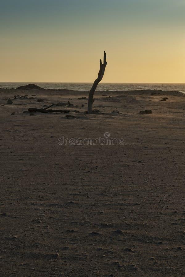 Уединенный ствол дерева с заходом солнца на горном склоне пляжа Namibe дикого вышесказанного anisette стоковая фотография