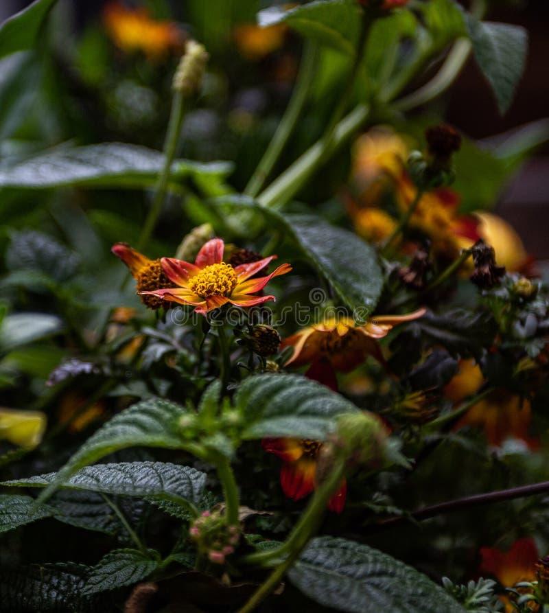 Уединенный сфокусированный цветок стоковая фотография