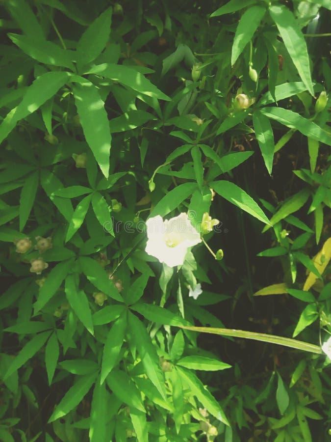 Уединенный цветок между листьями стоковое изображение rf