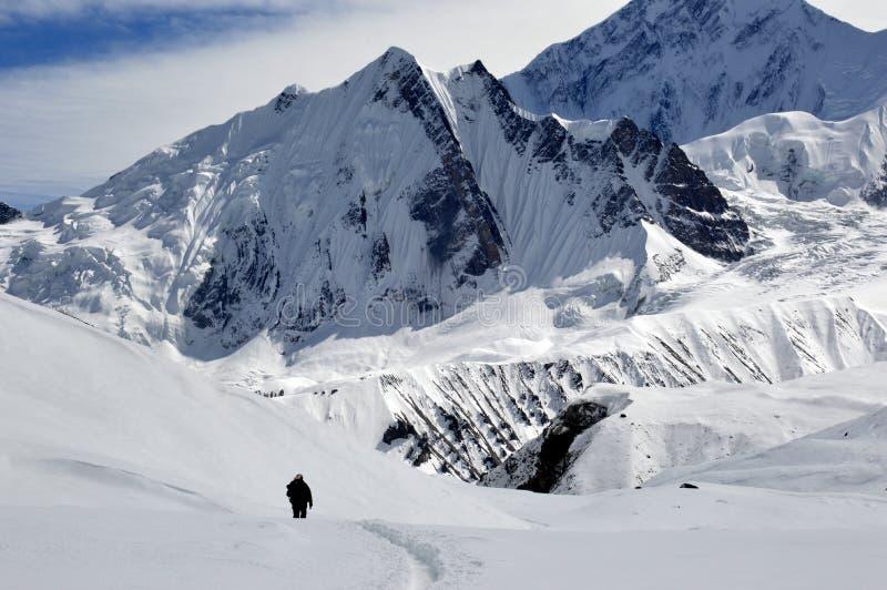 Уединенный hiker на треке озера Tilicho на цепи Annapurna, идя через снег, окруженный снегом покрыл пики, Гималаи, стоковая фотография