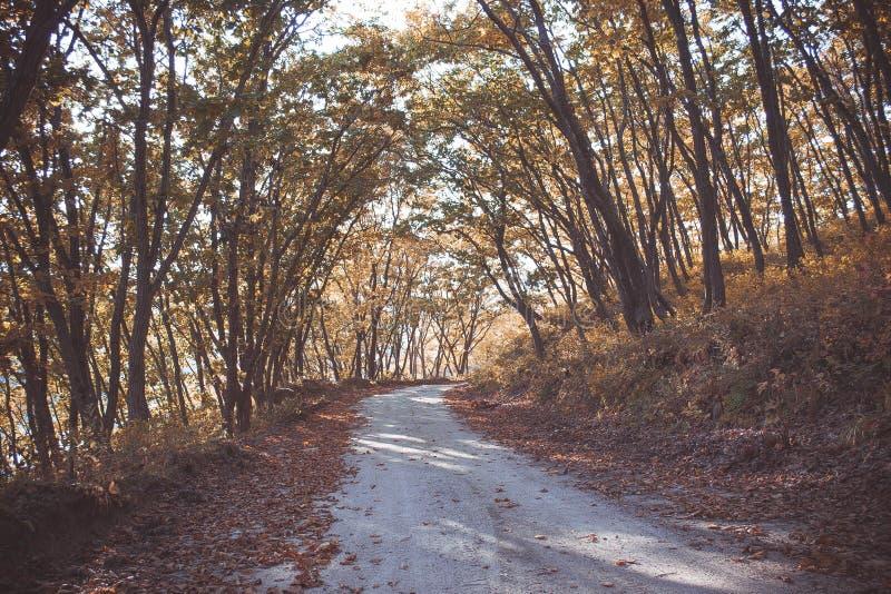 Уединённая дорога осени в лесе стоковые фотографии rf