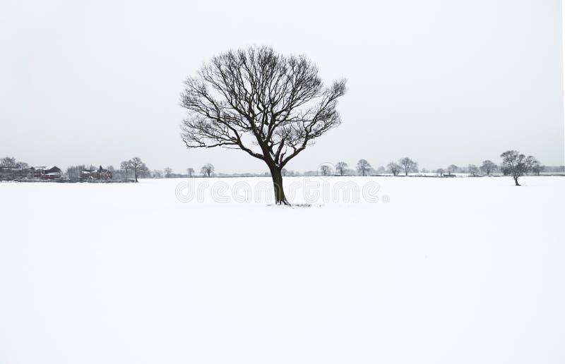 уединённая зима вала снежка стоковая фотография