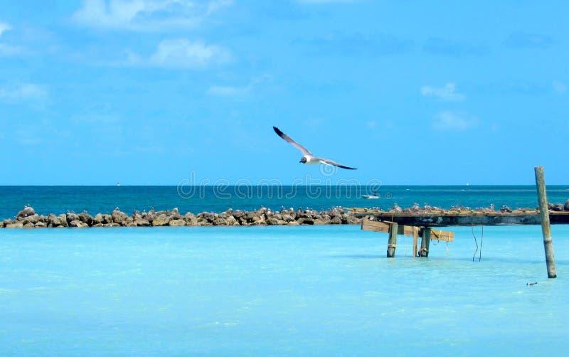 Уединённая чайка скользя над отмелым открытым морем стоковые изображения rf