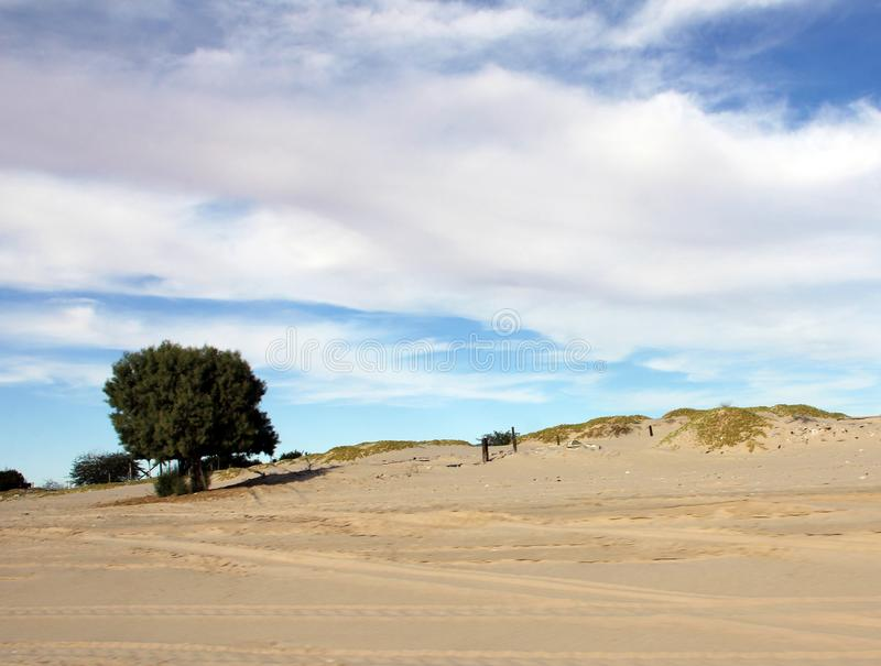 Уединённое дерево в песке вдоль моря Cortez, El Golfo de Santa Clara, Соноры, Мексики стоковое изображение