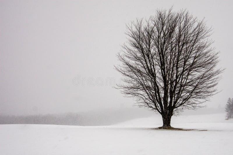 Уединённое дерево в снежном поле стоковое фото
