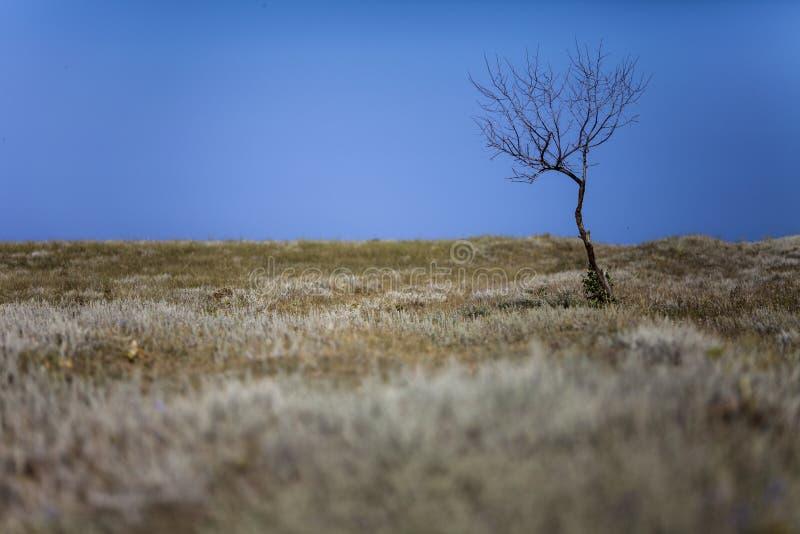 Уединённое сухое дерево без листьев готовит дорогу стоковое фото rf