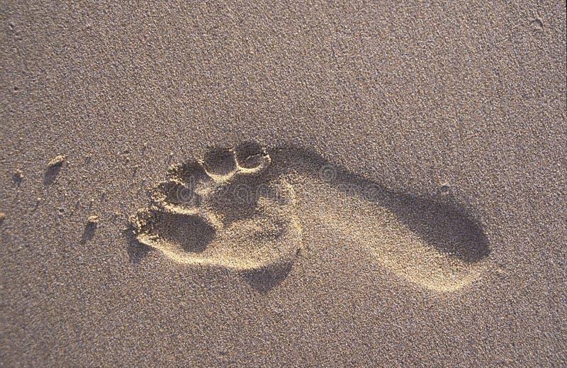 Уединённый след ноги в песке стоковая фотография rf