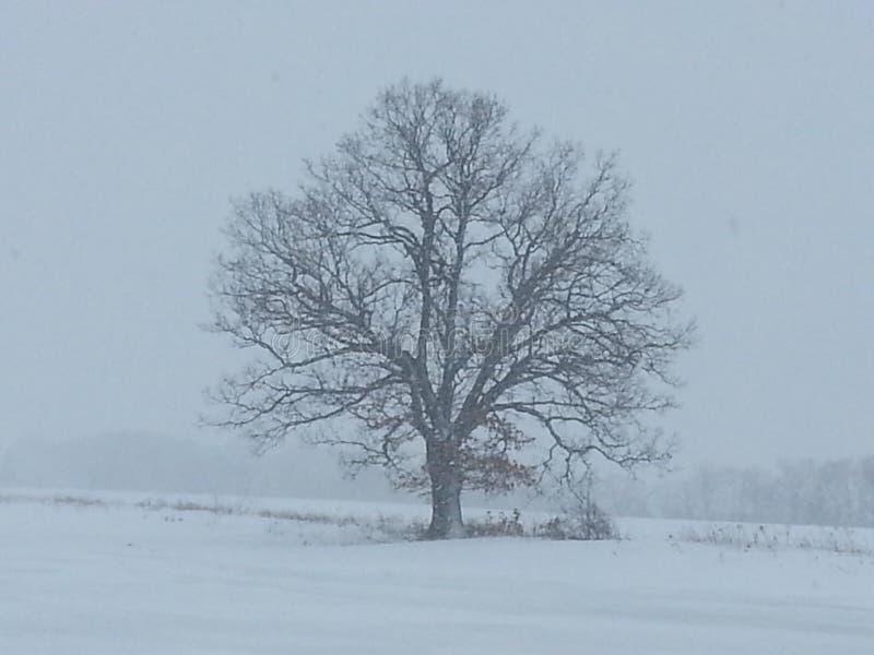 Уединение зимы стоковое фото rf