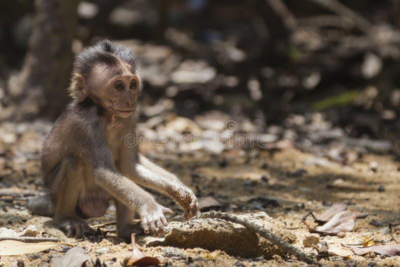 Уединённая обезьяна младенца стоковое изображение rf
