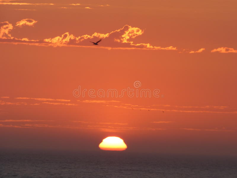 Уединённая птица во время захода солнца стоковое изображение rf