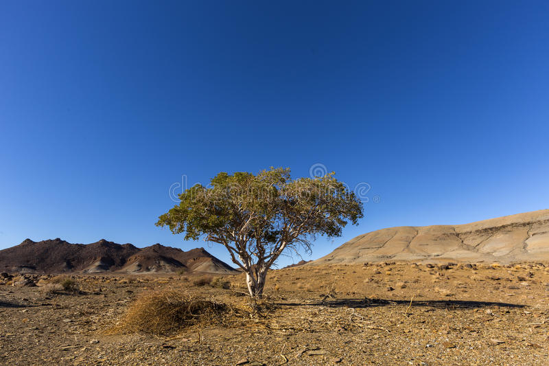Уединённое дерево в непроизводительной земле стоковые изображения rf