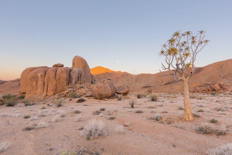 Уединённое дерево и утесы колчана стоковое изображение