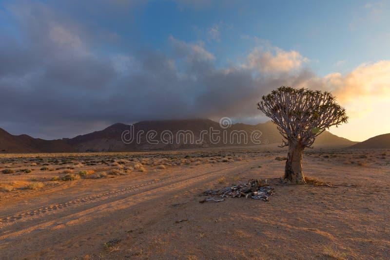 Уединённое дерево колчана стоковые фотографии rf