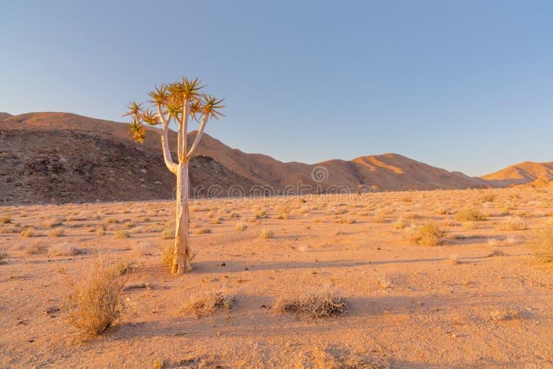 Уединённое дерево колчана стоковая фотография rf