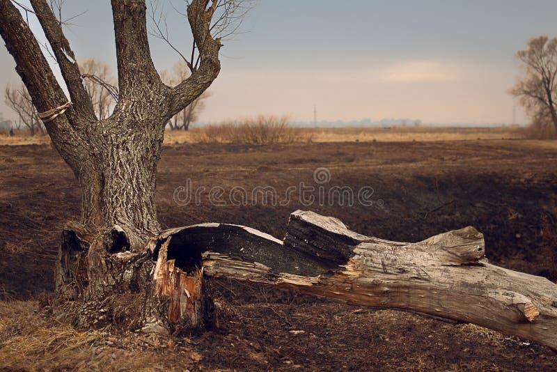 Уединённое старое дерево в крупном плане захода солнца осени стоковая фотография rf