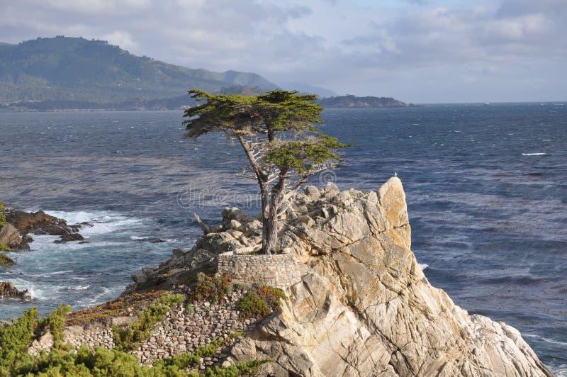 Уединённый кипарис на полуострове Монтерей стоковое фото