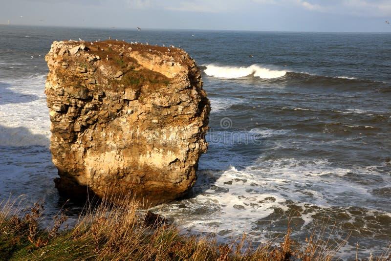 Уединённый утес моря стоковые изображения