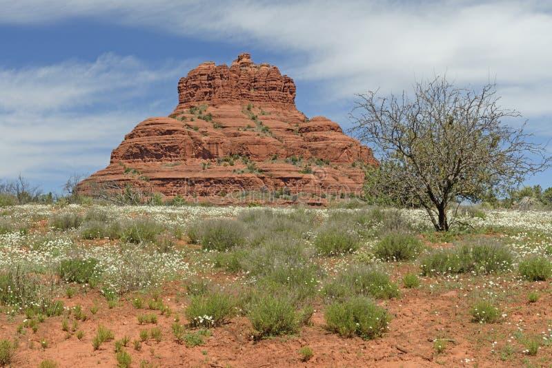 Уединённый Butte в пустыне весной стоковое фото