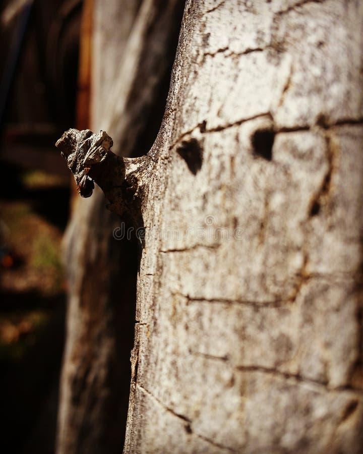 Узел на древесине стоковая фотография