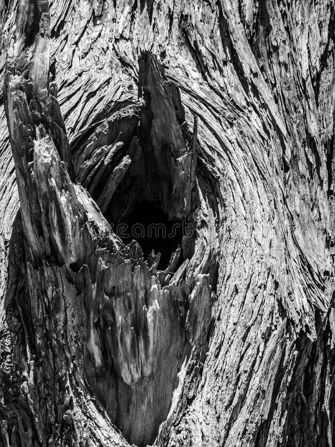 Узел старого сухого дерева стоковые изображения