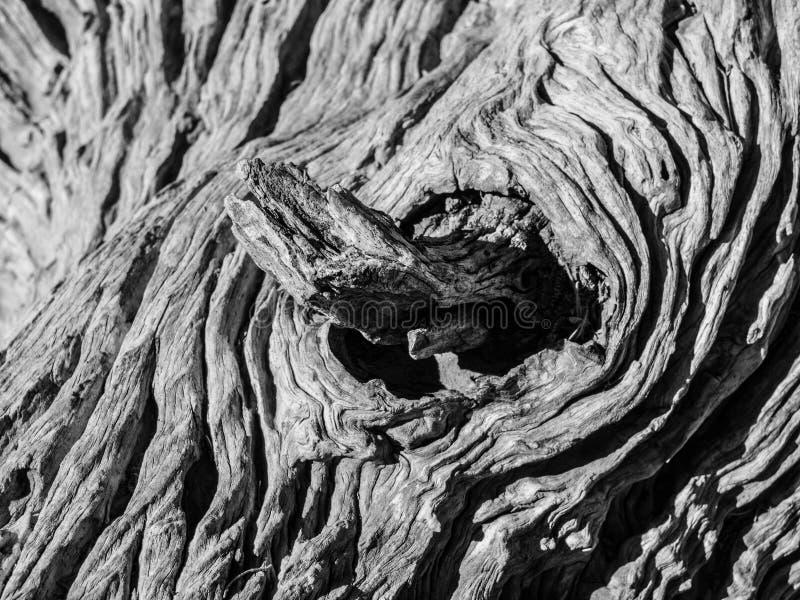 Узел старого сухого дерева стоковое изображение rf