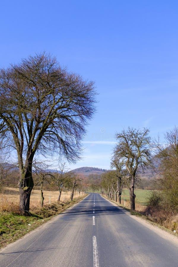 Узкая вымощенная дорога между полями стоковое изображение