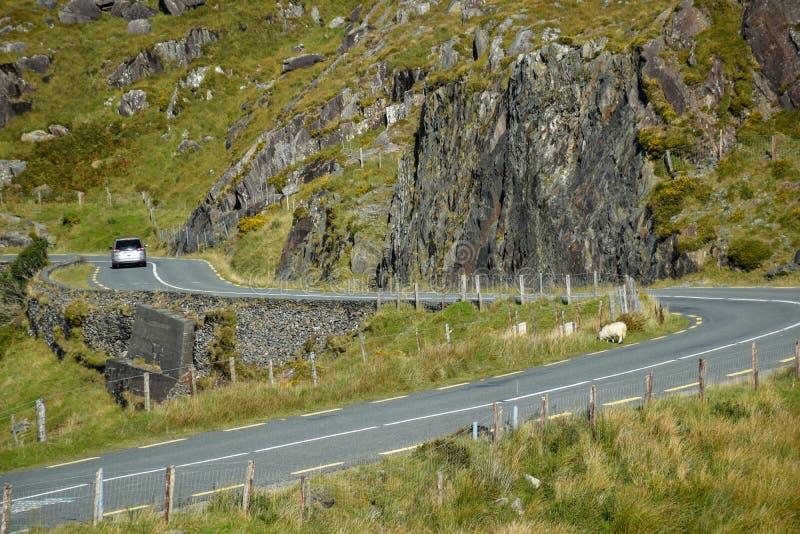 Узкая замотка дороги асфальта среди зеленых холмов Ирландии Molls проделывают брешь Кольцо Керри стоковое изображение rf