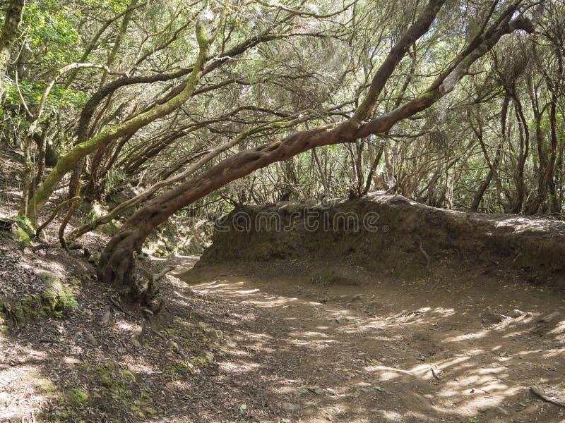 Узкая тропа на пути od Sendero de los Sentidos чувства внутри стоковое изображение rf