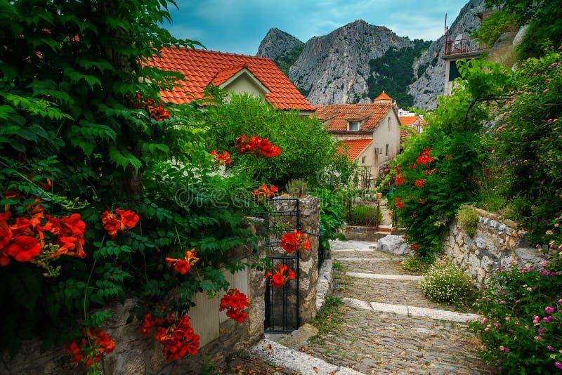 Узкая улица с цветущим входом в Омис, Далматия, Хорватия, Европа стоковое изображение rf