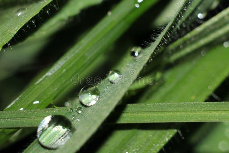 узкая часть травы поля росы глубины стоковые изображения