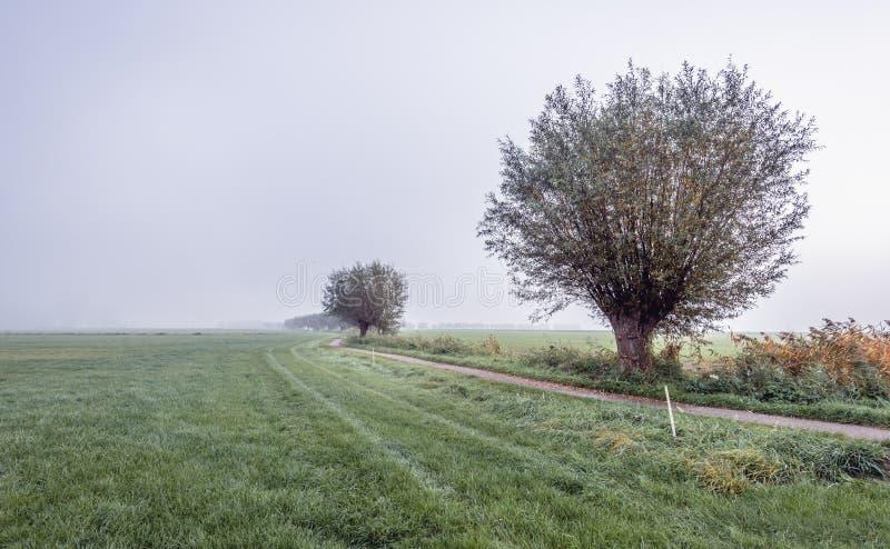 Узкий путь велосипеда через сельский голландский район с лугами и стоковое фото rf